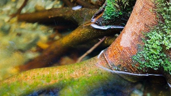 Nav About Woodmeisterway